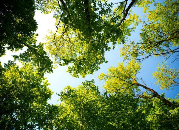 Trees - Baeume